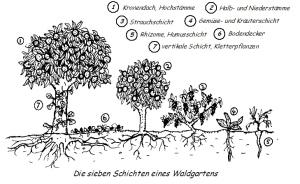 Stockwerke des Waldgartens