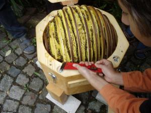 Bienenkugel geöffnet