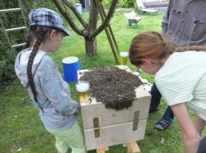 Die Töchter des Erfinders beim Schwarmeinlauf in die Bienenkugel
