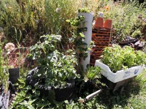 Urban Gardening: Kartoffelturm, Erdbeerbaum und Eidechsenburg als Nützlingsbiotop
