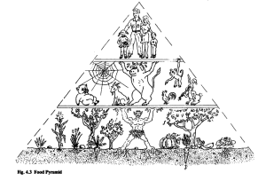 pc food pyramid plan illustration