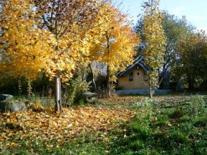 goldener Oktober Druidenhaus