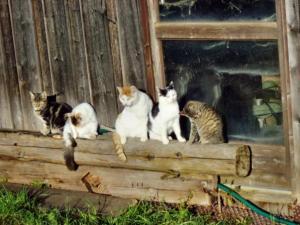 Katzenparade