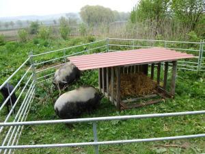 Schweinetraktor