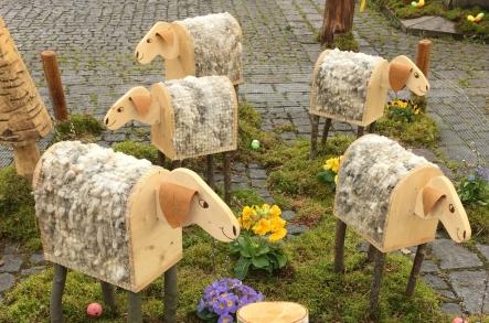 07_Schafe 1