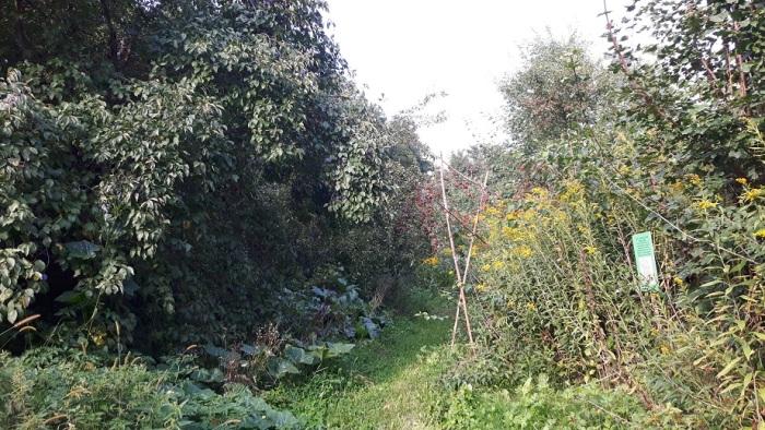 Waldgarten Zone 2