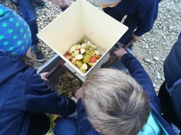 Äpfel häckseln